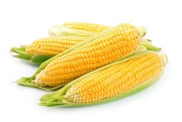 milho-verde-organico